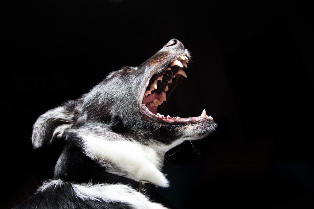 Reasons to Hire a Specialized Lawyer in Dog Bite Lawsuit